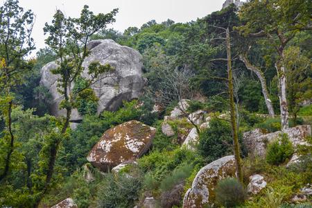 Bosque antiguo - paisaje del bosque verde con piedras y cantos rodados.