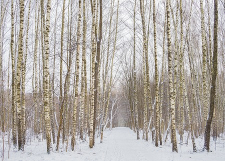 frostbitten: Beautiful winter forest with trees covered snow. Stock Photo