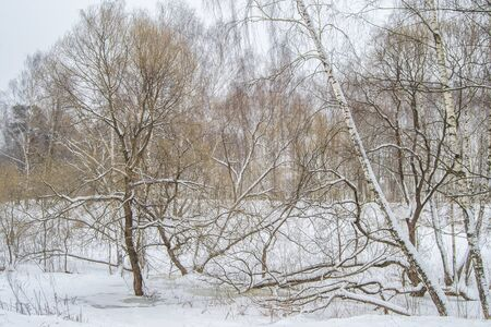 cold day: cold day in the snowy winter forest.