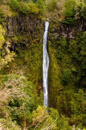 Waterval is het eiland Madeira. Waterval tussen de varens. Verlaten plaats. Madeira Island