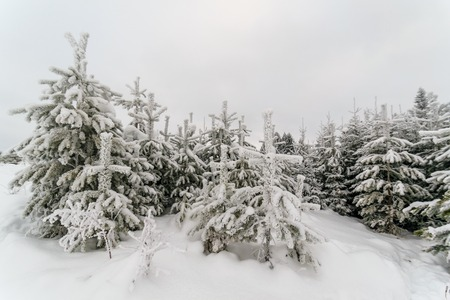 Russisch winterbos. Forest frost sprookje