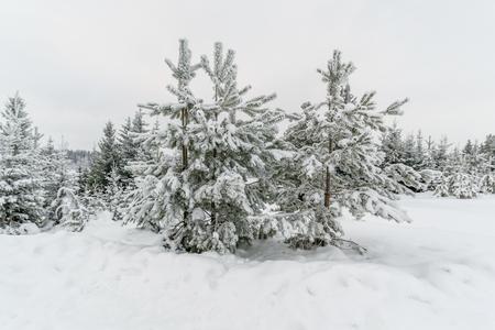 Russisch winterbos. Bosvorst sprookje. Stockfoto