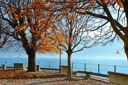 misterious: View with trees of Lake Iseo, Lovere, Italy