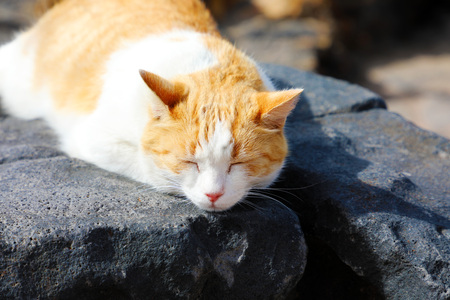 Cute cat take a nap on Lanzarote black stones Stock Photo