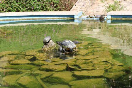 Fountain with turtles Banco de Imagens