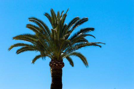 villefranche sur mer: Palm in Cap Martin