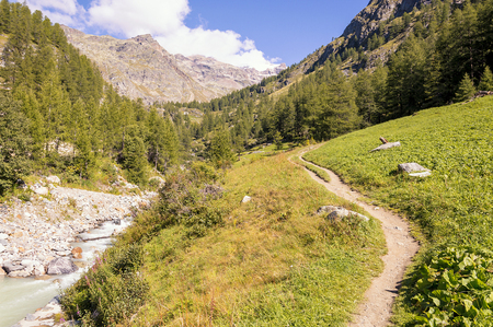 Hiking path in a forest in the valley of Gressoney near Monte Rosa