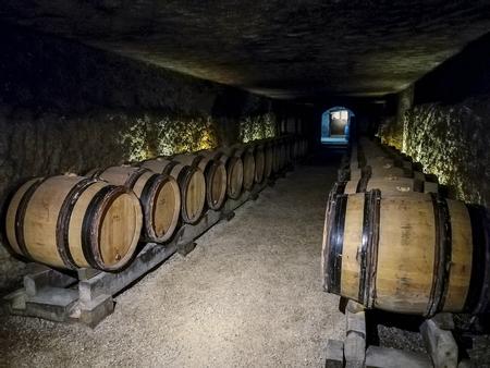 Barrels full of grapes just after harvesting in Burgundy France