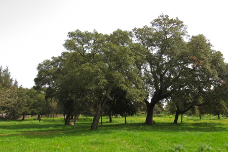 St. Augustines park, oak forest in Sardinia (Italy)