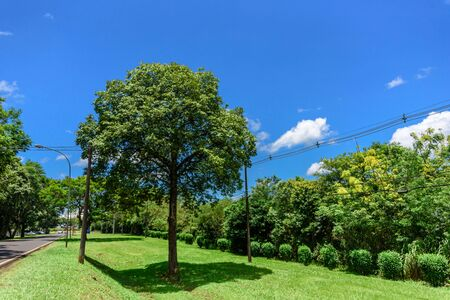 Green trees with green grass, poles with wires, highway and blue sky with white fluffy clouds at hot sunny summer day