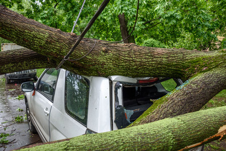 Gigantic fallen tree toppled and crushed parked car, broke the window and damage electrical cable as a result of the severe hurricane winds in one of courtyards of Moscow
