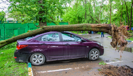 Gigantic fallen toppled tree, covered with moss and with huge roots, crushed parked purple car and broke the window as a result of the severe hurricane winds in one of courtyards of Moscow city Stock Photo