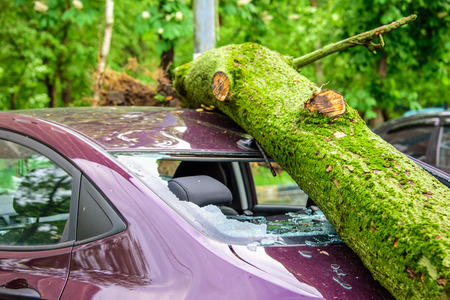 Gigantic fallen toppled tree covered with moss crushed parked purple car, broke the window and antenna as a result of the severe hurricane winds in one of courtyards of Moscow Reklamní fotografie