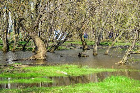 Spring flooded trees with blossoming buds in the Kolomenskoye museum-reserve Reklamní fotografie