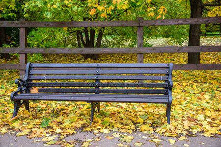 View of wooden bench and grass covered with autumn golden leaves with wooden fence and green trees and bushes on the background in Kolomenskoye park at warm November day, Moscow city, Russia