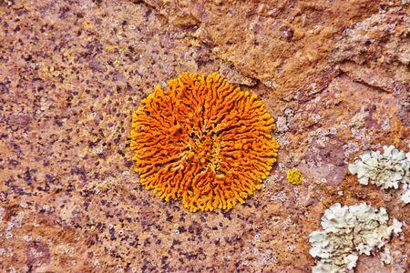 Orange lichen in Grand Canary