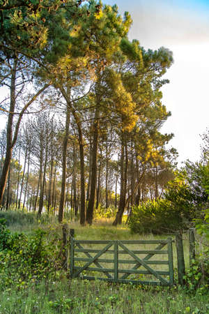 gated entrance gate to a field and the sun goes down in the afternoon in the pine forests illuminating their glasses