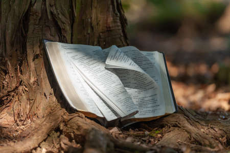 Holy Bible outdoors on tree trunk with pages turning in wind and sunlight. Blurred background with copy space. Close-up.