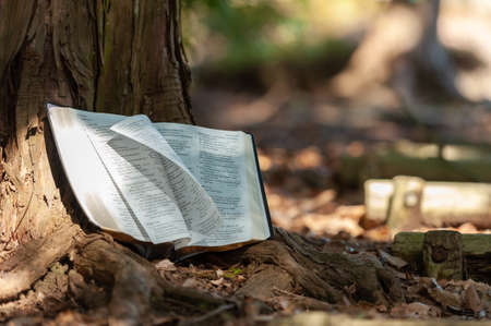 Holy Bible outdoors on tree trunk with pages turning in wind and sunlight. Blurred background with copy space.