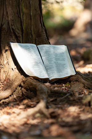 Holy Bible open in Psalm 107 and Psalm 108 outdoors on the tree trunk and sunlight. Blurred background. Copy space. Vertical shot.