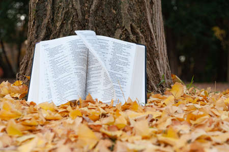 Holy Bible opened in Psalms on tree trunk with pages turning in the wind in Japanese autumn with fallen yellow leaves.