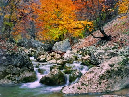 Autumn tree near the river in the Grand Canyon of Crimea photo