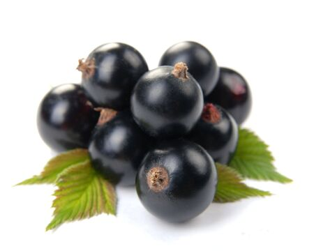 pulpy: Currant black on white background  Stock Photo