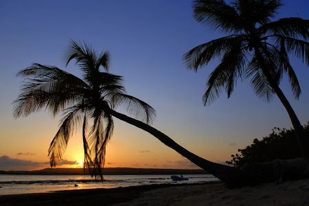 Caribbean Islands, palm trees, a decline photo