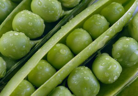 heartiness: Green peas in pods with water drops