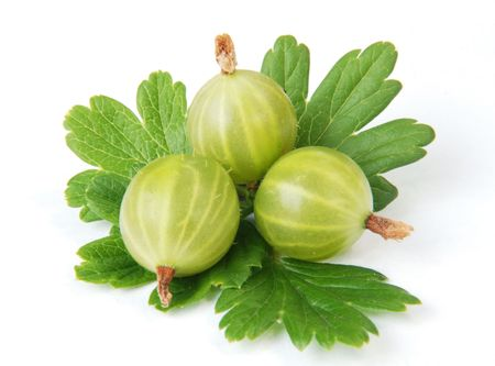 gooseberry: Gooseberry on a white background.