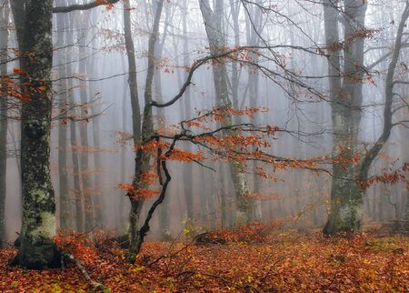 Autumn tree in the Crimean wood
