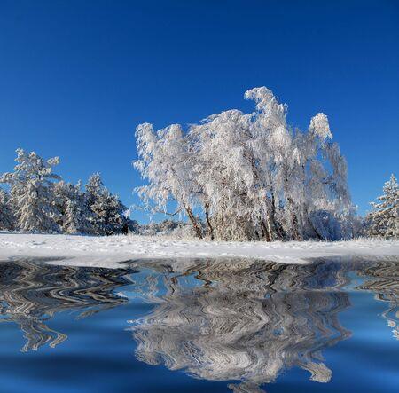 reflexion: Madera de abedul de invierno con la reflexi�n en el agua