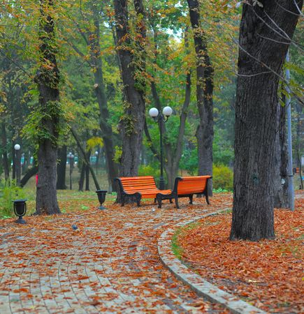 Benches in city park in the autumn photo