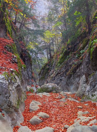 Track in gorge of the Grand Canyon of Crimea in the autumn Stock Photo - 5885873