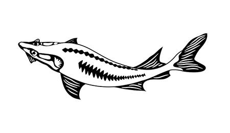 white phosphorus: Black-white image of a river sturgeon