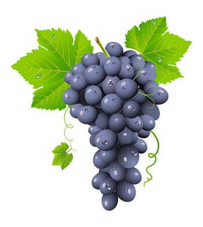 uvas: Cl�ster de uva  Vectores