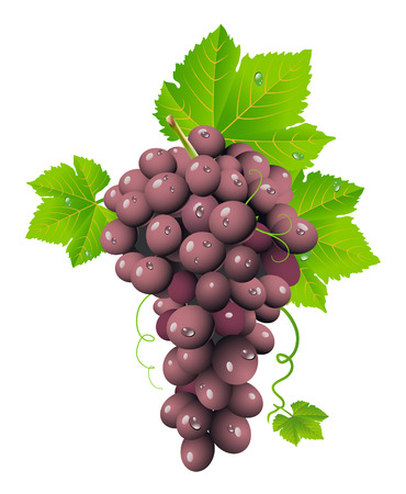 red grape:  Grape cluster