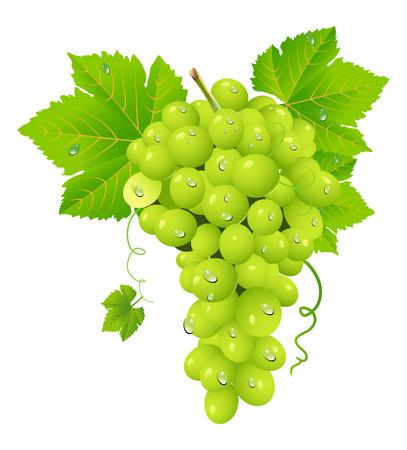 white grape cluster