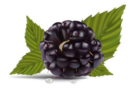pulpy: dewberries (blackberries) and green leaves are on white background