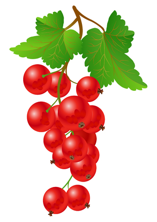 Currant red on bench on a white background