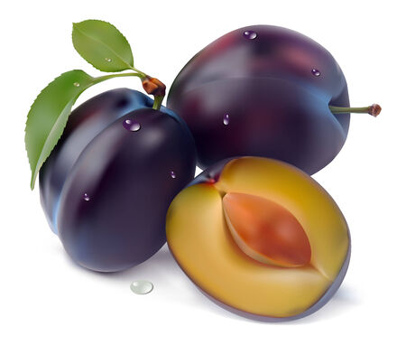 reds: plum and leaves on a white background  illustration