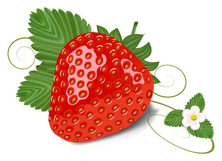 strawberry with leaves and flower  Иллюстрация