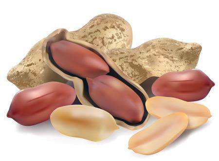 cacahuate: Man� en un shell y haga efectivo sobre un fondo blanco