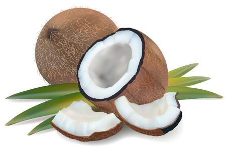 noix de coco: Noix de coco avec des feuilles sur un fond blanc. vecteur