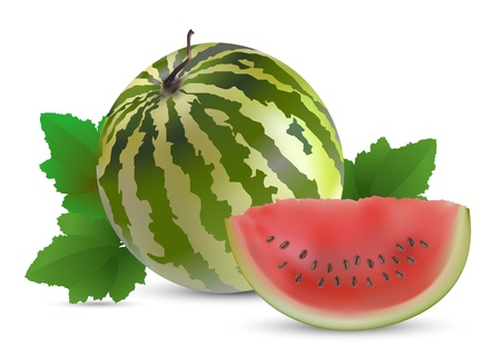 Watermelon with slices  Illustration