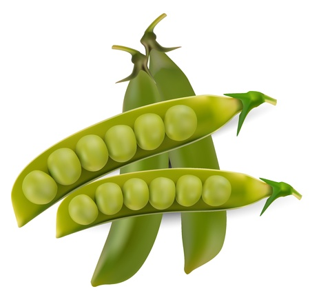 pea pod: Green peas vegetable with seed Illustration