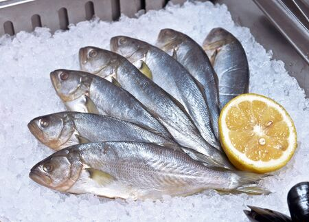 bluefish: bluefish on ice in the showcase restaurant