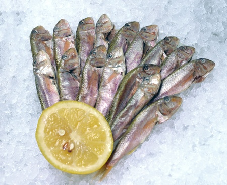 Black Sea red mullet on ice in the window of the restaurant Stock Photo - 21896069