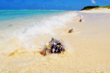 Caribbean Islands, landscape, travel, the sea, ocean, sandy coast, corals, a desert island, a cockleshell, a wave, a surf, the dark blue sky, emerald water