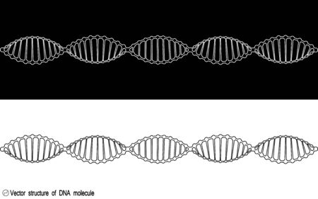 A set of two variants of the DNA molecule, outline. Black and white variety. Simple drawing, icon. For your design. Isolated. Stock Illustratie
